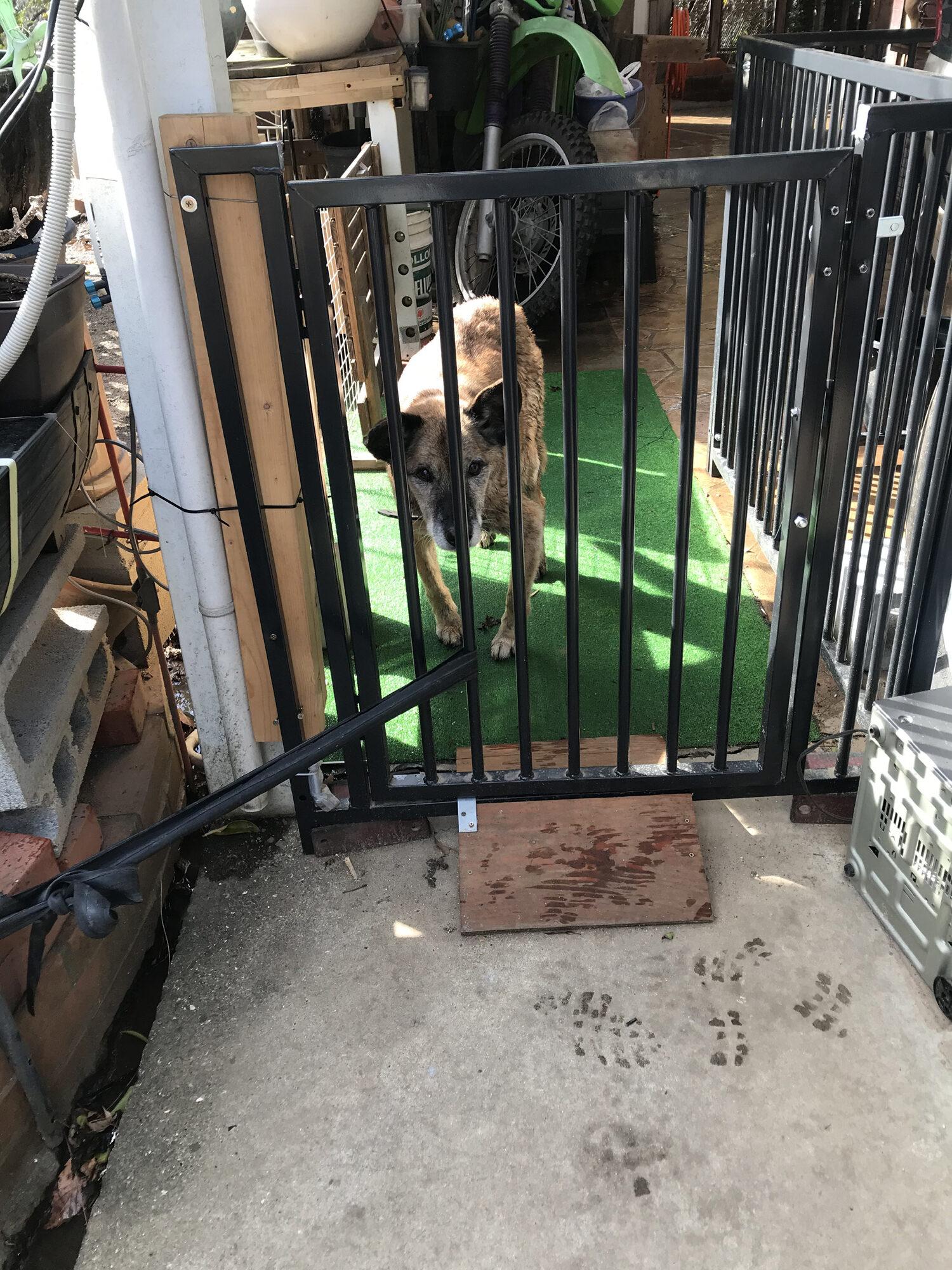 トラ、プチ家出したが警察に保護されました。