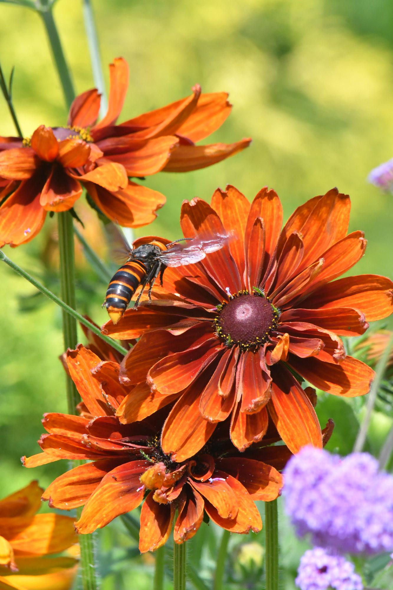 北山緑化植物園、花を超望遠で撮る。
