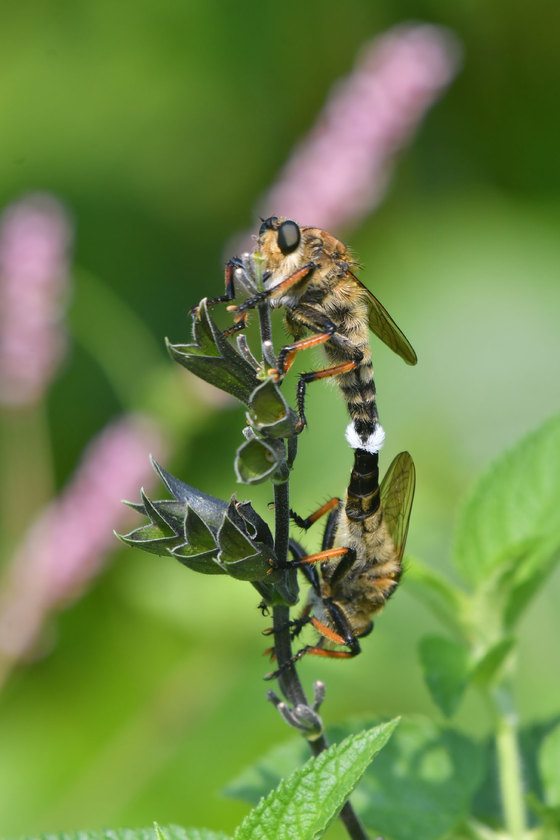 虫でも撮って見る。