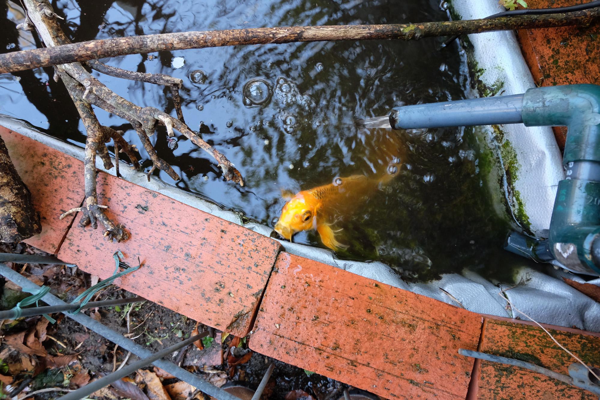 小さな池のメンテ。