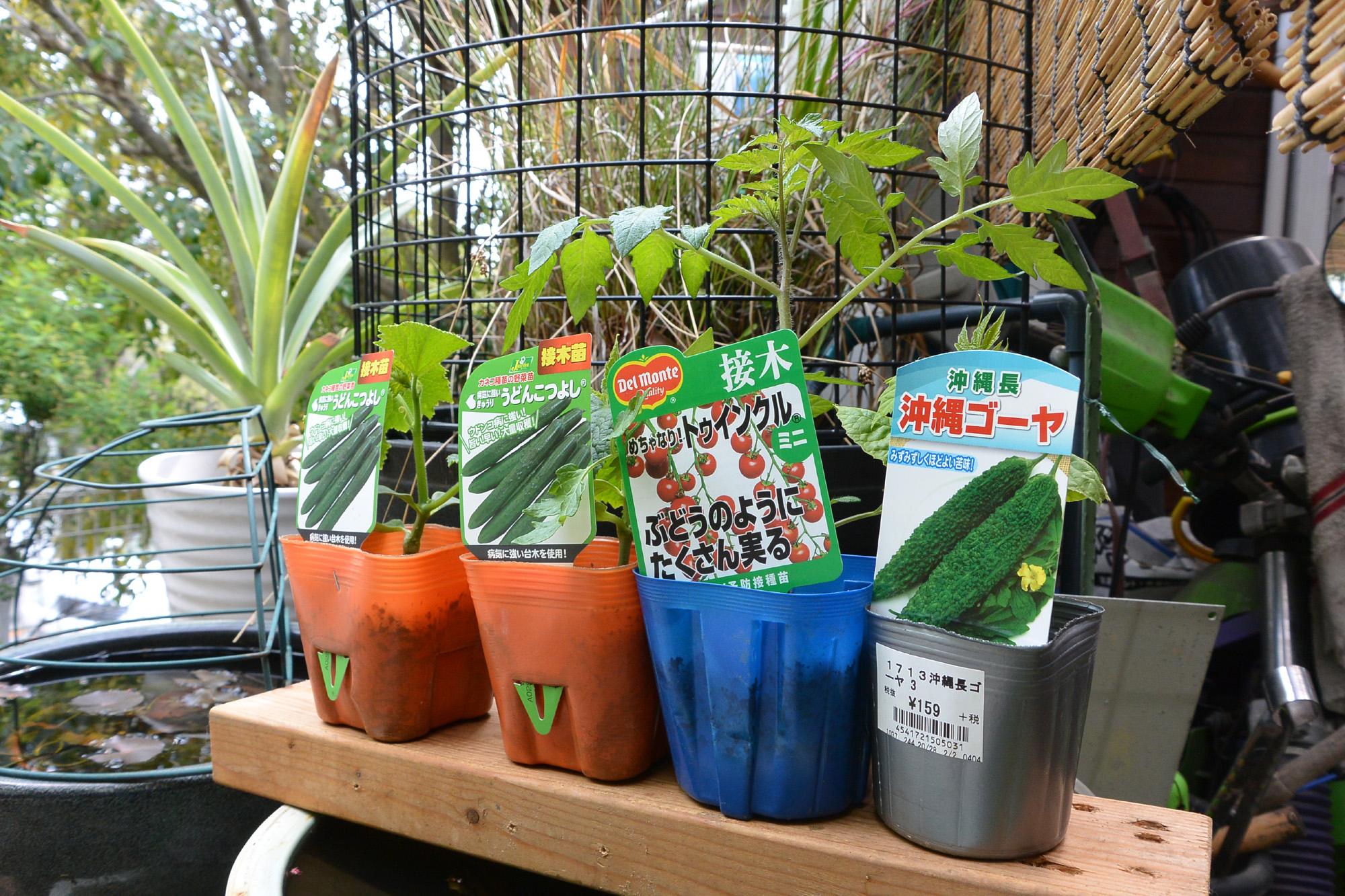 2020家庭菜園で夏野菜 苗木を植えました。
