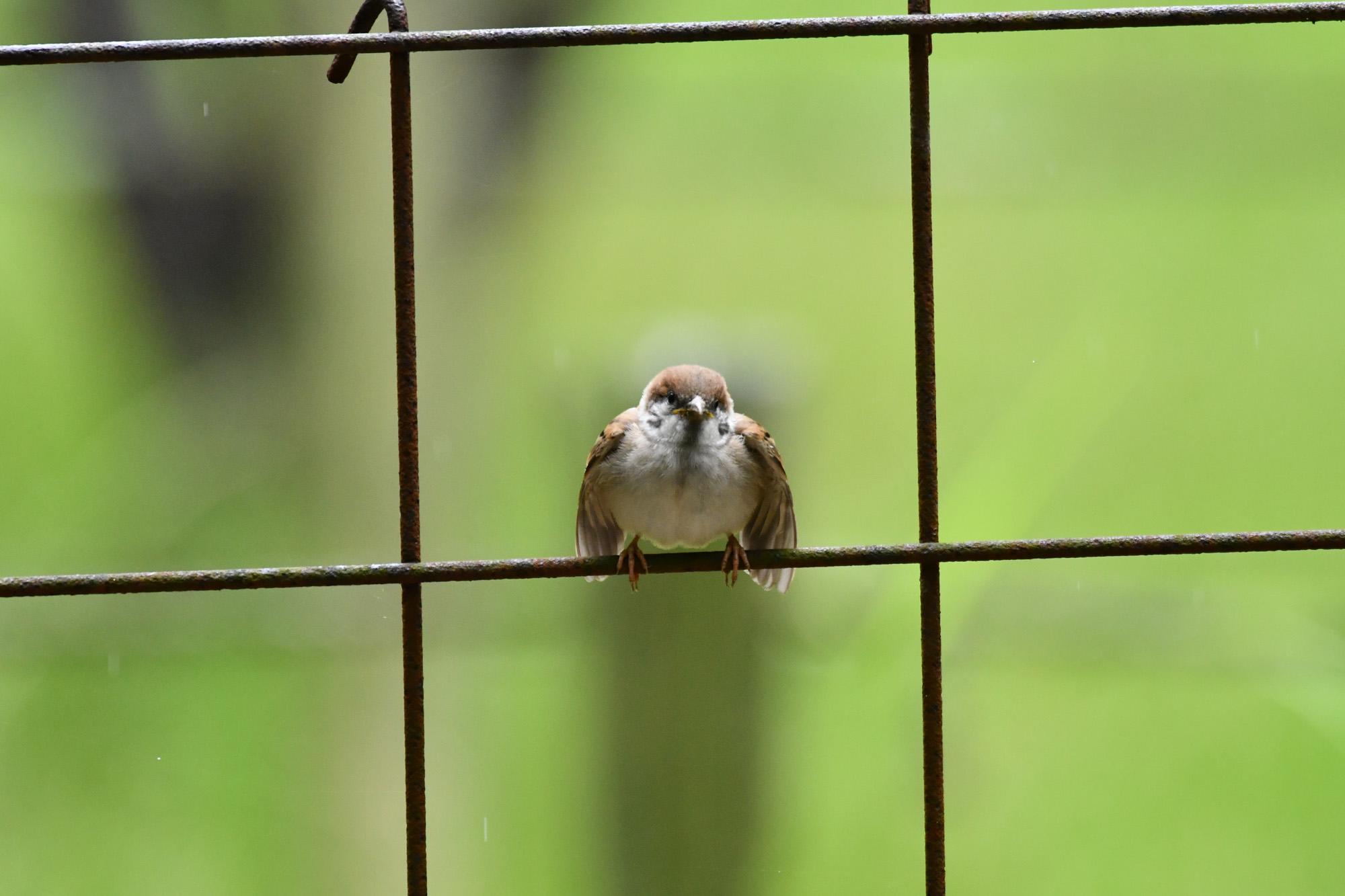 雀さんを一生懸命撮る私。