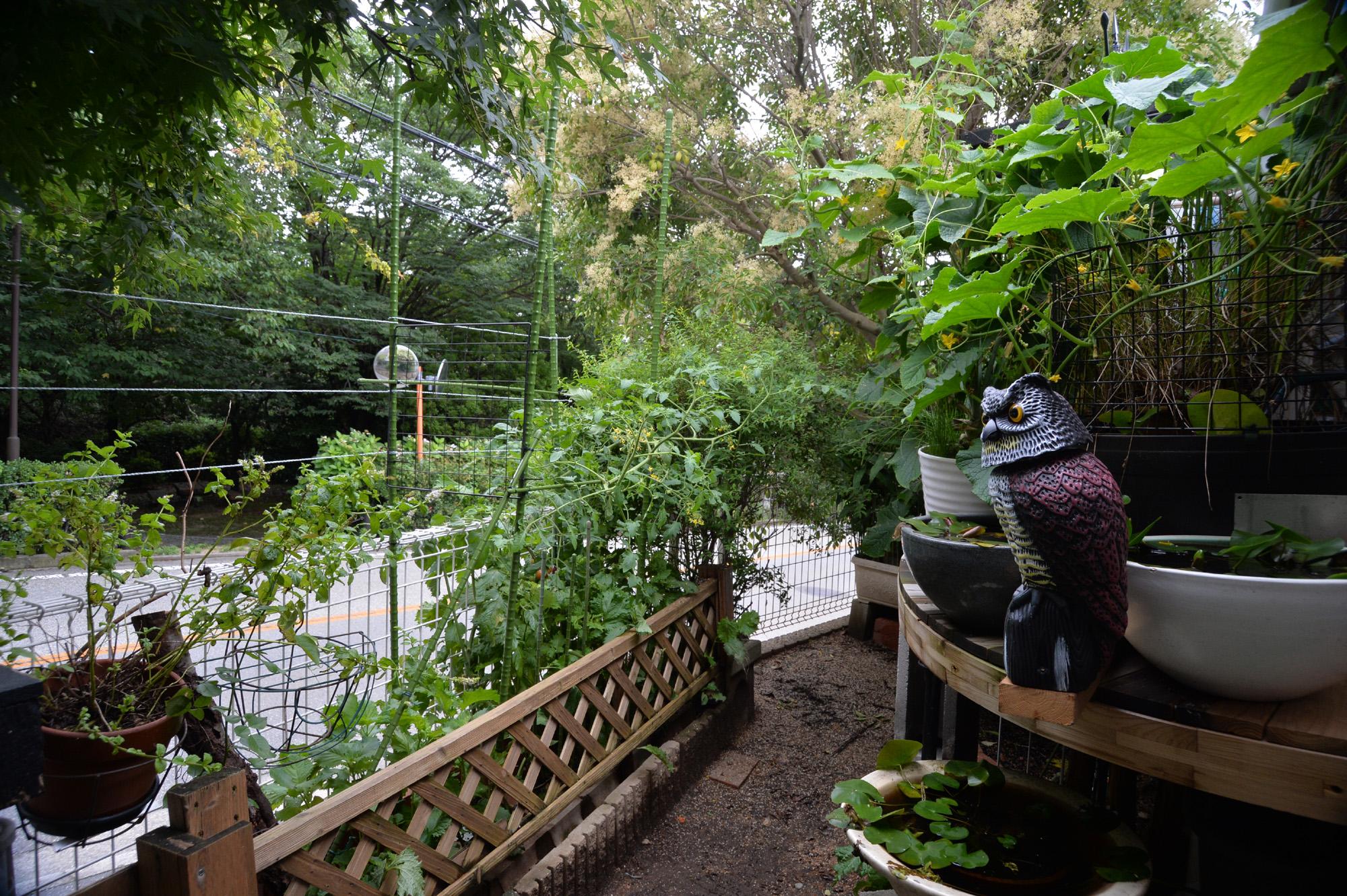 家庭菜園をハシブトカラスから守れ~! カラス対策にフクロウの置物