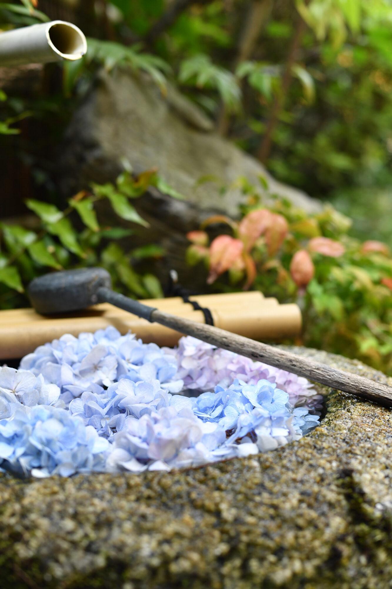 和菓子写真 花手水 商品撮影しました。