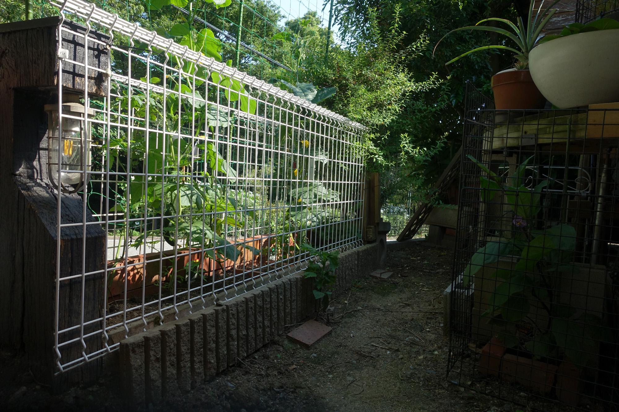 庭で犬と家庭菜園の両立 2021年